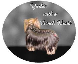 Yorkie with a french braid2