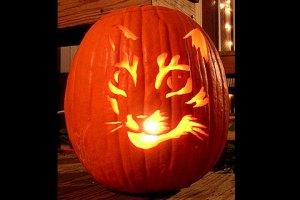 cat-pumpkin-carving_05